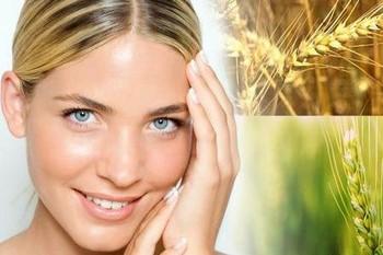 Масло из зародышей пшеницы для лица: эффект