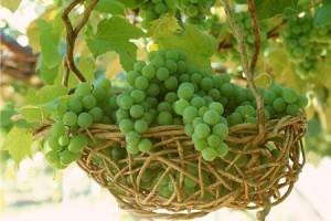 Виноград для лица в домашних условиях