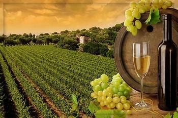 Виноград для лица: рецепты