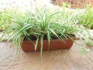 ТОП-8 растений-лекарей